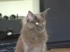 Mobile Katzenbetreuung Wien - Katzensitting