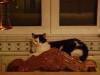 Indoor Cat - Mobile Vorort Betreuung Stieglecker Wien