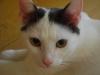 Katzen Verhalten - Treteln ist der Milchtritt der Katze. Sie macht dabei massierende, stampfende Bewegung - langsam und gleichmäßig, fast wie in Zeitlupe.