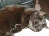 Katzen - Das Skelett der Hauskatze besteht aus über 230 Knochen.
