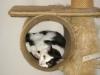 Katzenbetreuung Wien - Betreute Katzen