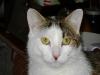 Cat Day Sitter - Land Katzen Betreuung