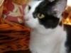Cat Day Sitting - Hauskatze Leila