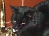 Cat Day Sitting - Hauskatze Amelia beim Wassertrinken