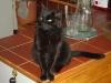 Cat Day Sitter - Hauskatzen Betreuungsservice Wien