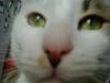 Cat Day Sitter - Hauskater Urlaubsbetreuung  Wien