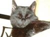 Cat Day Sitter - Hauskätzin betreut in Wien