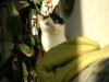 Cat Day Sitter - Hauskatze mobil betreut in Wien
