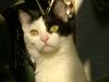 Cat Day Sitting - Bauernkatze