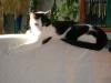 Cat Day Sitting - Kätzinnen betreut in Wien