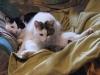 Cat Day Sitting - Wohnungskatzen Urlaubssitter Wien