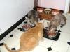 Rexkatzen sind keine züchterische Kreation