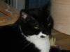 Katzen - Die nächste Stufe dieses Warnzeichens kann ein Pfotenhieb sein