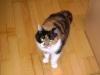 Katzen - begonnen bei haarlosen Katzen, und vor allem bei den Kurzhaar- und Langhaarkatzen.