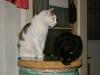 Cat Daysitting - Kater und Kätzin betreut in Wien