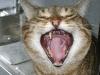 Die Gesichtsmimik der Katze