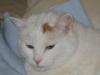 Weißer Kater - Vor Ort Katzen Tagesbetreuung