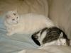 Hauskatzen - Katzen Betreuungsservice Wien
