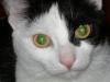 Hauskatze - Hauskatzen Betreuungsservice Wien
