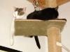 Kater Neo und Kätzin Amelia - Hauskatzen Service Wien