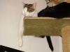 Kätzin Amelia und Kater Neo - Katzen Urlaubsservice Wien