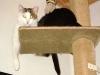 Hauskatze Neo und Hauskatze Amelia - Hauskatzen Tagesservice Wien