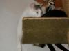 Hauskatzen Betreuung - Tagesservice Wien