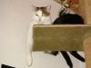 Hauskater Neo und Hauskätzin Amelia - Betreute Hauskatzen Wien