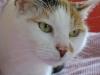 Katze Daisy verliert die Geduld