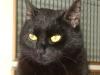 Schwarze Kätzin - Schwarze Katzen betreut in Wien