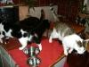 Katzentreiben - Katzen Gruppenbetreuung Wien