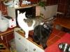 Indoor Hauskatzenbetreuung Wien - Wohnungskatzen Gruppenbetreuung Wien