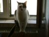 Hauskatze Neo - Katzen Einzelbetreuungsservice Wien