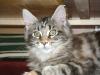 Kätzchen Luna ganz aufmerksam
