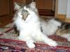 Katze Fabienne