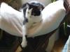 Hauskatze Leila ist entspannt