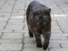 Freiläufer Hauskatze Mirna auf Wanderschaft