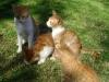 Katzenmama Sphinx und ihre Jungen