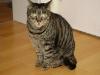 Cat Daysitting - Kater Romeo