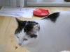 Cat Daysitting - Betreuung von Hauskatzen in Wien
