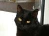 Cat Day Sitting - Die Betreuung Ihrer Katze