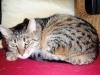Katze Verhalten - Es gibt zwar – wie bei allen sozialen Tierarten – auch unter den Hauskatzen Einzelgänger, von Natur aus sind sie jedoch soziale Tiere.