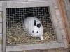 Kleintier Betreuung - Kaninchendame Emilie schaut nach dem Wetter