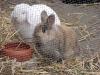 Kleintier Betreuung - Kaninchenbub Felix und Kaninchendame Marie