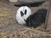 Kleintier Betreuung - Kaninchen Mädchen Emilie und Kaninchen Bub Peppino