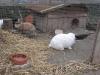 Kleintier Betreuung - Kaninchen Bub Felix und Kaninchen Mädchen Marie