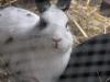 Kleintier Betreuung - Kaninchen Mädchen Emilie