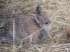 Kleintier Betreuung - Kaninchen Mädchen Marie