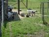 Kleintier Betreuung - Ziegenfamilie