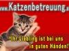 Katzenbetreuung Wien - Banner